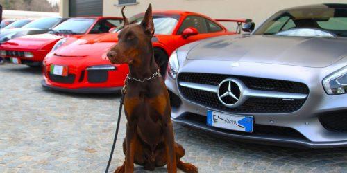 Club Auto Sportive Legnanesi